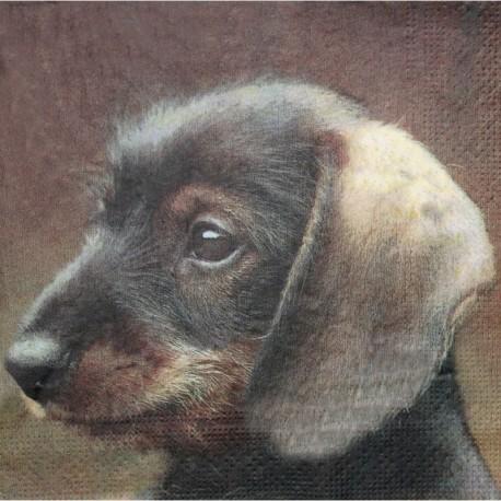 Pes jezevčík