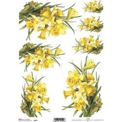 Rýžový papír Narcisy