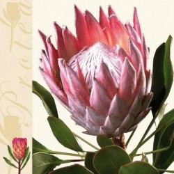 Ubrousek Protea 33x33 cm