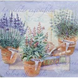 Ubrousek, Tři květináče, levandule, rozmarýn