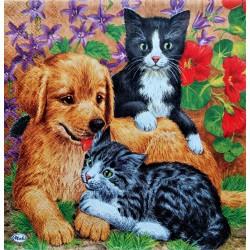 Ubrousek, Pejsek a koťátka